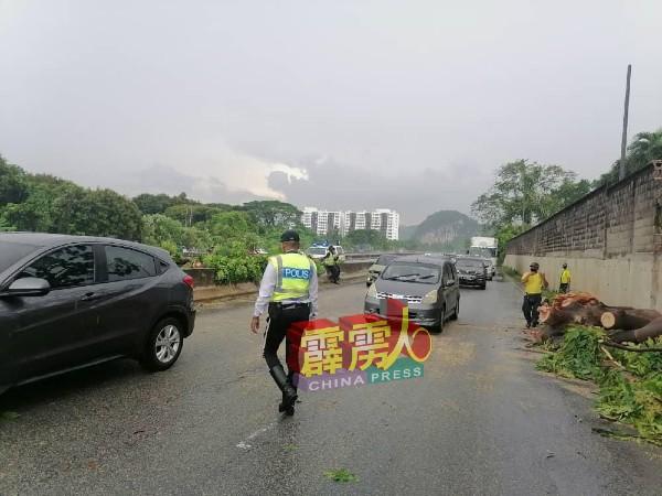 负责大道交通的交警,在倒树现场维持交通。