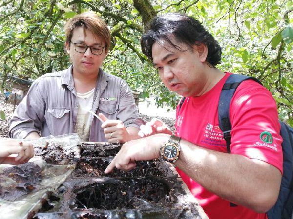 陈朝进(左起)向《中国报》安顺办事处高级记者蔡耀梁,展示蜂巢内部,示范如何汲取蜂蜜。