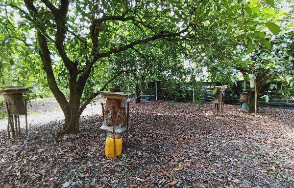 为确保锋巢原生态,果园零农药使用,环境清幽,形如世外蜂园。